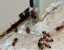 Ant Control Grand Rapids