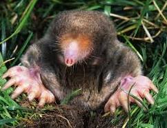 Grand Rapids Mole Removal